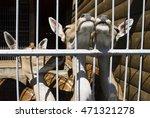Three Young Deer In The Kiev Zoo
