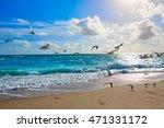 Singer Island Beach Seagulls A...
