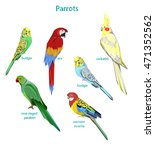 set parrots vector illustration ... | Shutterstock .eps vector #471352562