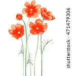 cosmos flower watercolor. | Shutterstock . vector #471479306