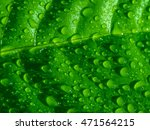 green leaf with water drops ... | Shutterstock . vector #471564215