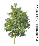 green tree isolated on white   Shutterstock . vector #471575432