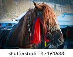 Close Up Of A Horse Head In...