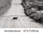 Stock photo black cat is crossing the road 471715016