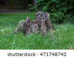 Old Rotten Tree Stump In The...