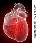 human heart | Shutterstock . vector #47176639