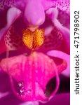 Pink Phalaenopsis Orchid Macro...