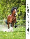 bay vladimir heavy draft horse... | Shutterstock . vector #471907952