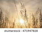 grass swaying in the morning... | Shutterstock . vector #471947828