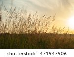 grass swaying in the morning... | Shutterstock . vector #471947906