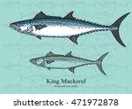 King Mackerel. Vector...