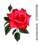 beautiful red rose isolated on... | Shutterstock .eps vector #472059448
