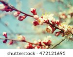 fresh leaves against the sky | Shutterstock . vector #472121695