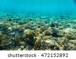 beautiful coral reef under water | Shutterstock . vector #472152892