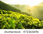 Stock photo green tea bud and fresh leaves tea plantations in munnar kerala india 472363696