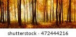 Autumn  Forest Of Deciduous...