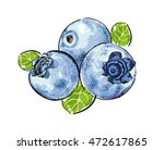 hand drawn painting blueberry... | Shutterstock .eps vector #472617865