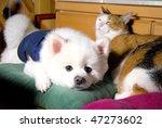 Stock photo dog cat 47273602