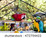 parrots aviary. macaws | Shutterstock . vector #472754422