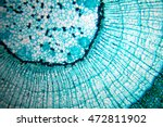 Plant Cell In Microscope Slide...