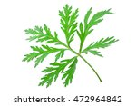 Small photo of Wormwood (absinthium)leaf