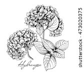 Set Of A Hydrangea Flowers And...