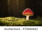toadstool  close up of a... | Shutterstock . vector #473060662