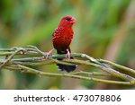 beautiful red bird  red... | Shutterstock . vector #473078806