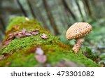 Poisonous Mushroom Toadstool...