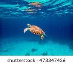 underwater with turtles ... | Shutterstock . vector #473347426