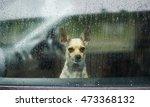 Chihuahua Behind Car Window...