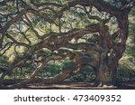 big  unique live angle oak tree ... | Shutterstock . vector #473409352