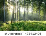 morning in the forest | Shutterstock . vector #473413405