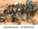 Swallowtail Butterflies Are...