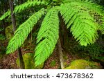fern leaves in a forest | Shutterstock . vector #473678362