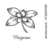 marjoram plant branch leaf.... | Shutterstock .eps vector #473835985