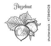 hazelnut nut seed vector....   Shutterstock .eps vector #473840428