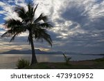 Coconut Palm Tree And Bay In...