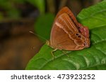 suffused double banded judy. in ... | Shutterstock . vector #473923252