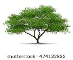 tree on white background | Shutterstock .eps vector #474132832