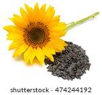 flower. sunflower isolated on...   Shutterstock . vector #474244192