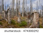 forest dieback by bark beetle... | Shutterstock . vector #474300292