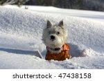 West Highland White Terrier Pu...