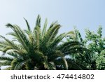 palm trees and blue sky | Shutterstock . vector #474414802