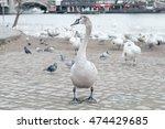 lot of white swans lurking... | Shutterstock . vector #474429685
