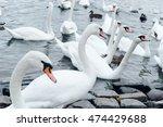 lot of white swans lurking... | Shutterstock . vector #474429688