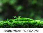 Sapling Moss Plant Tree