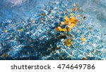 autumn leaves on the water   Shutterstock . vector #474649786