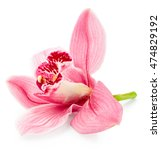 Pink Orchid Flower Isolated On...