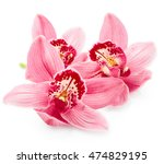 Beautiful pink orchid flowers...